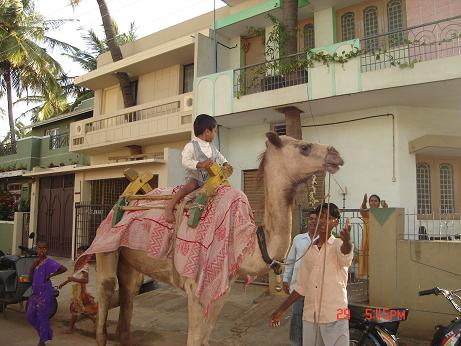 Camel ride in Mysore - Photographed at Mysore