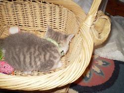 My kitten - My new kitten