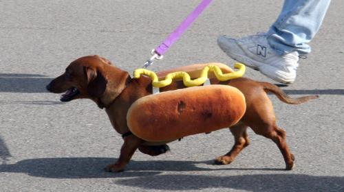 hot dog - Do you like hot dogs?