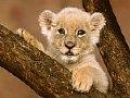 Cub - Look how cute is this cub.