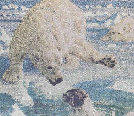 animal - polar bear and seal