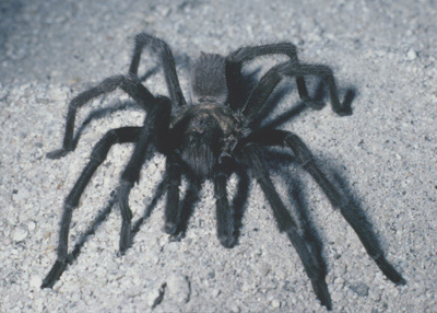 spiders - spiders