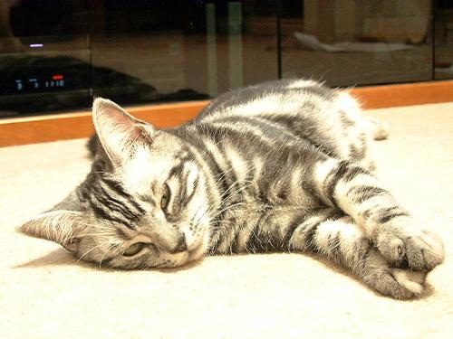 A Cat Sleeping - lol...
