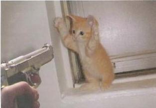 Not mine Cat :) - Cat