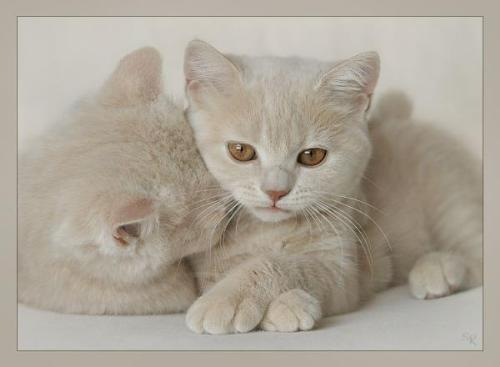 cute mom and kitten - soo sweet isnt'it?