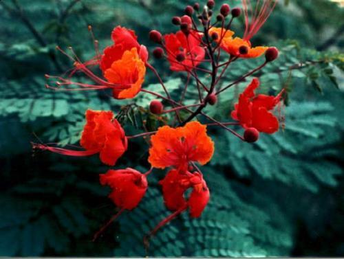 flower - lovely flower for my sweetheart