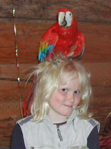 Megan with Scarlet Macaw Max - My wife first met Max when he just had one foot sticking out of his egg.  Max is a very intelligent pet who loves to socialize with people and to tease large dogs.